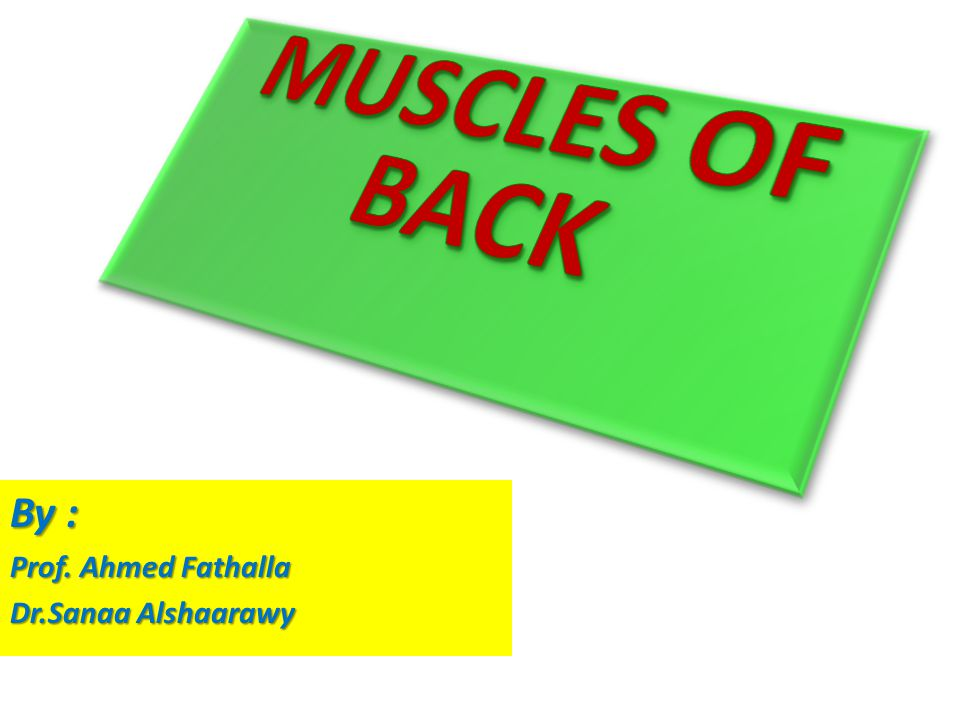 MUSCLES OF BACK By : Prof. Ahmed Fathalla Dr.Sanaa Alshaarawy