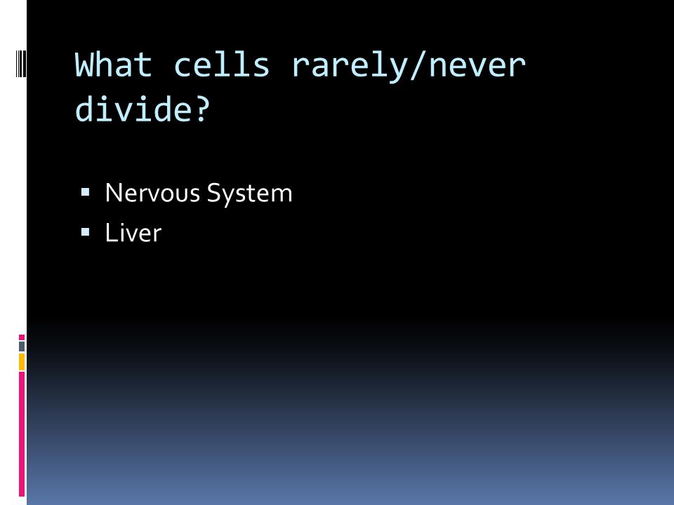 What cells rarely/never divide