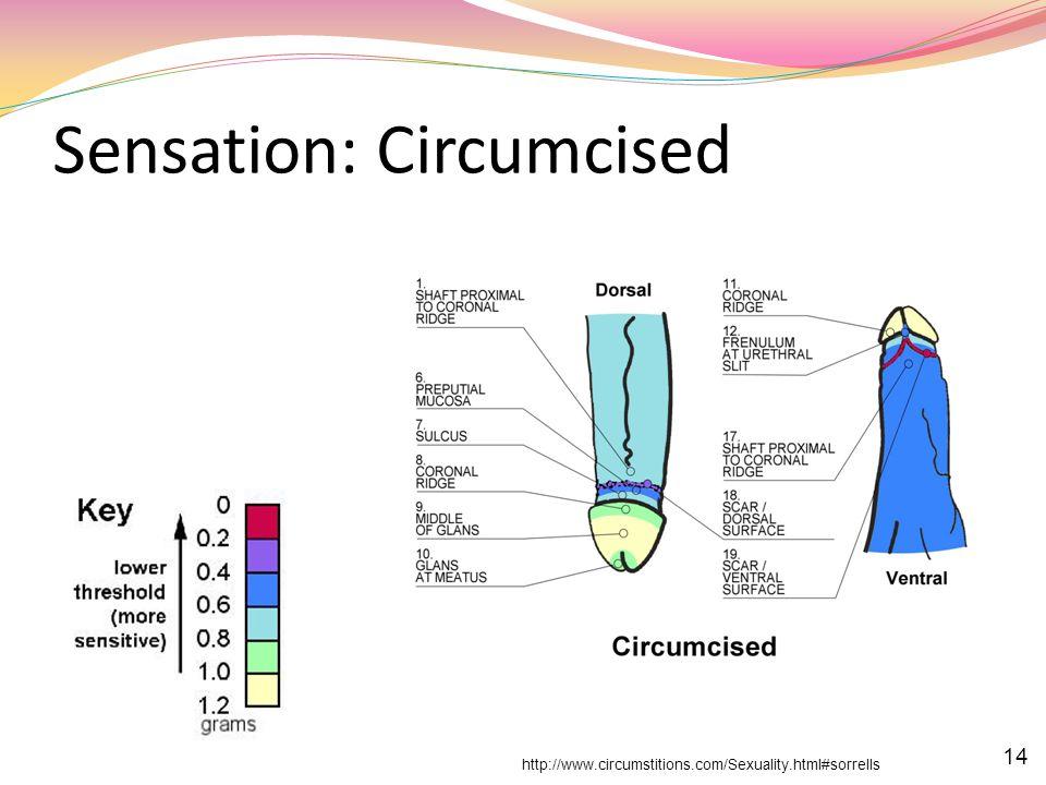 Sensation: Circumcised