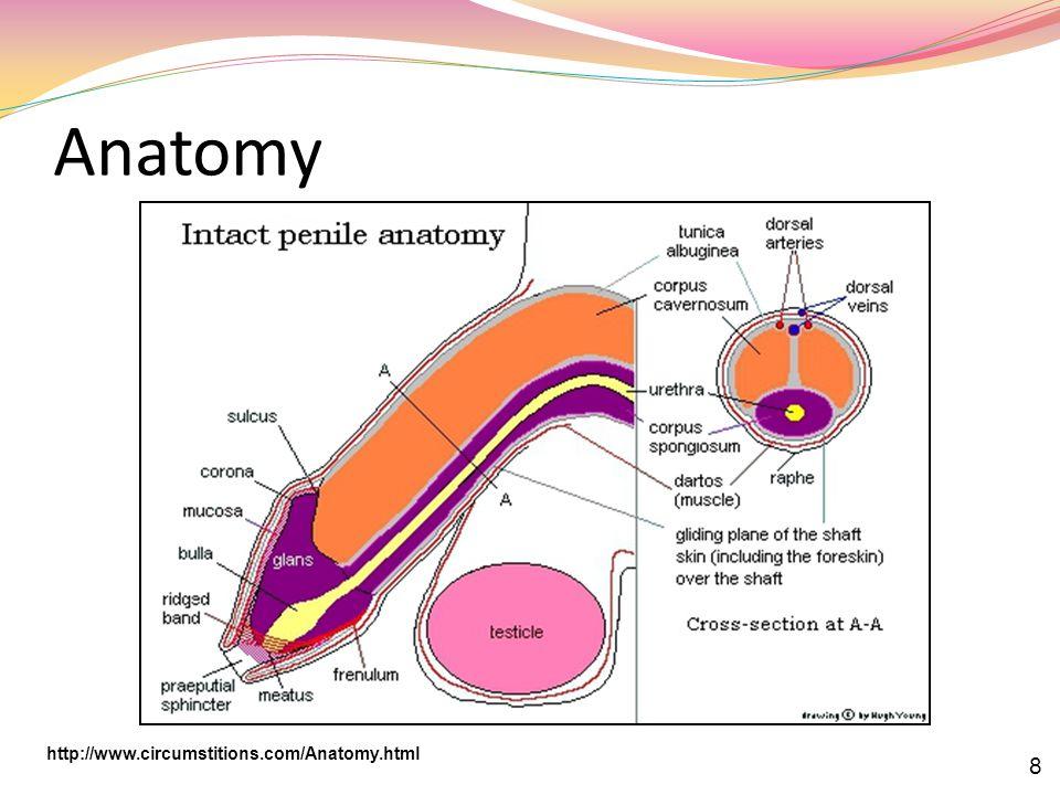 Anatomy http://www.circumstitions.com/Anatomy.html