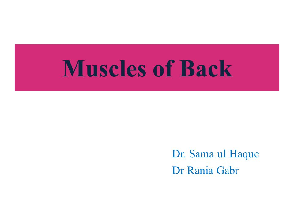 Muscles of Back Dr. Sama ul Haque Dr Rania Gabr