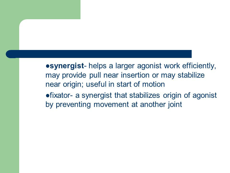 synergist- helps a larger agonist work efficiently, may provide pull near insertion or may stabilize near origin; useful in start of motion