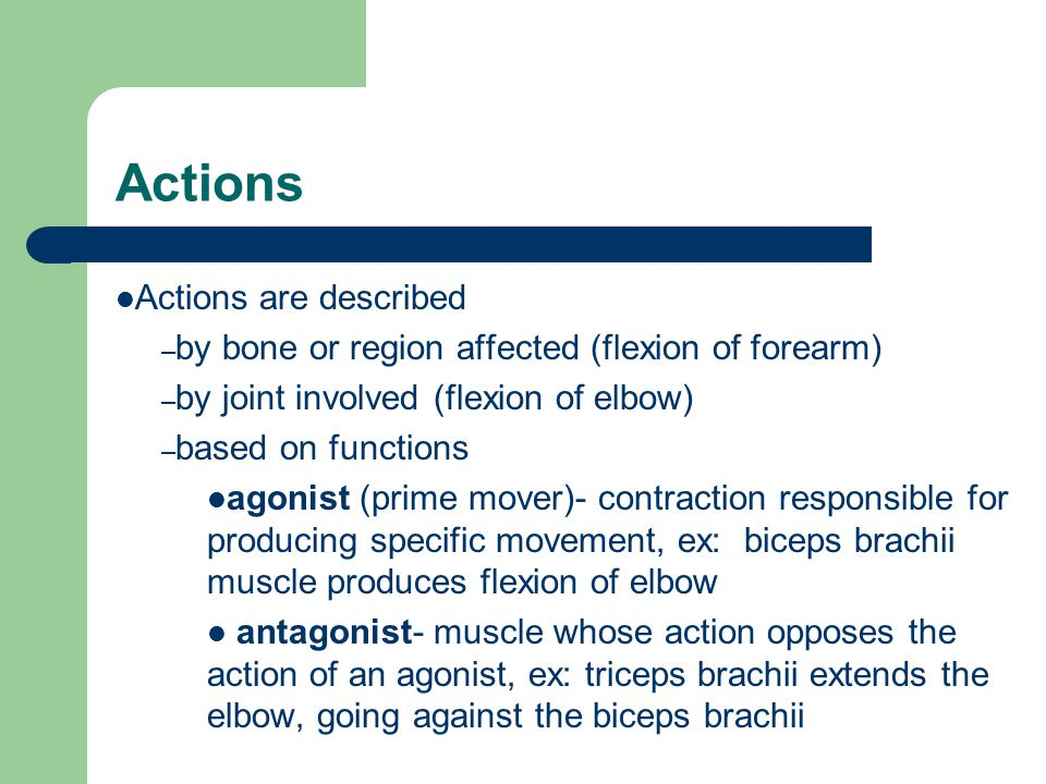 Actions Actions are described