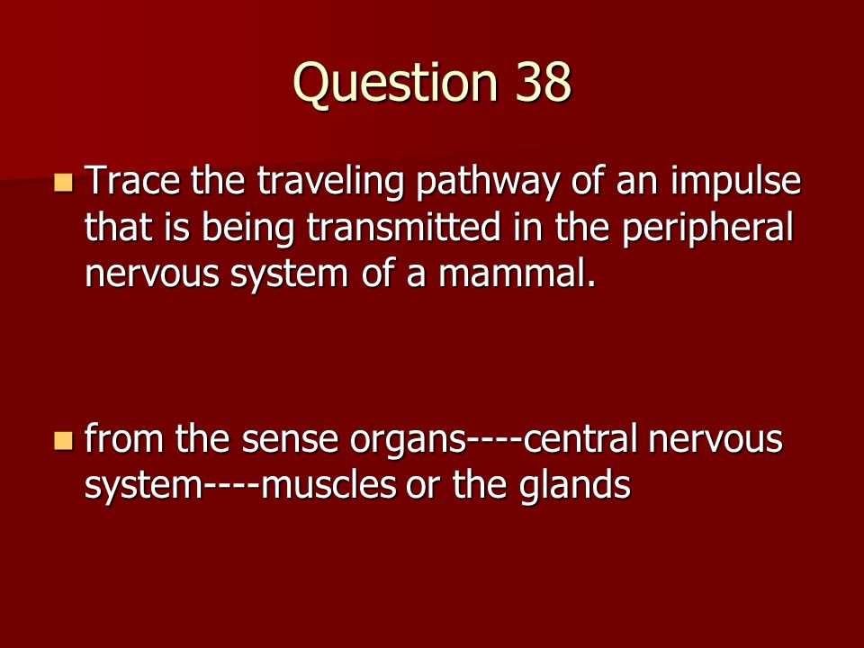 Question 38 Trace the traveling pathway of an impulse that is being transmitted in the peripheral nervous system of a mammal.