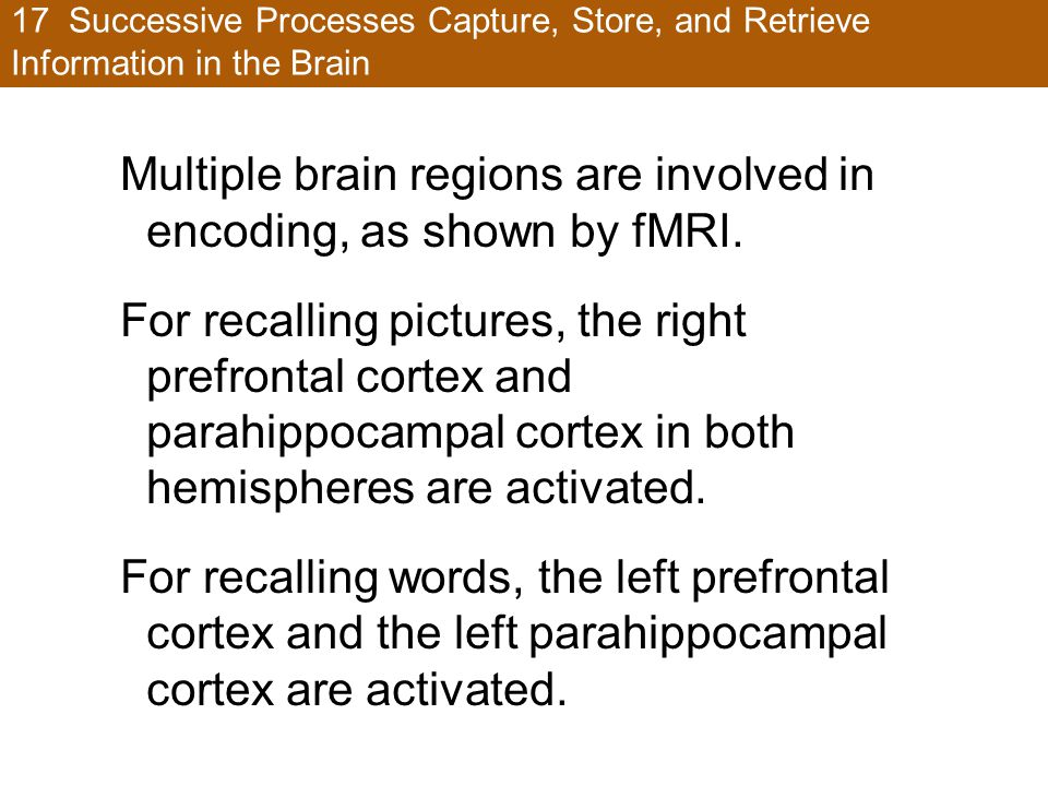 Multiple brain regions are involved in encoding, as shown by fMRI.