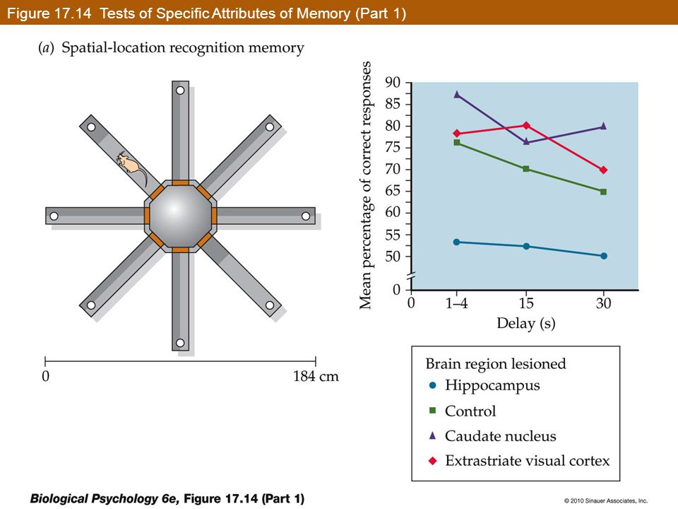 Figure 17.14 Tests of Specific Attributes of Memory (Part 1)
