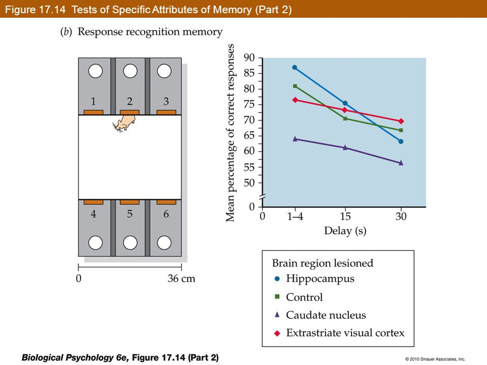 Figure 17.14 Tests of Specific Attributes of Memory (Part 2)