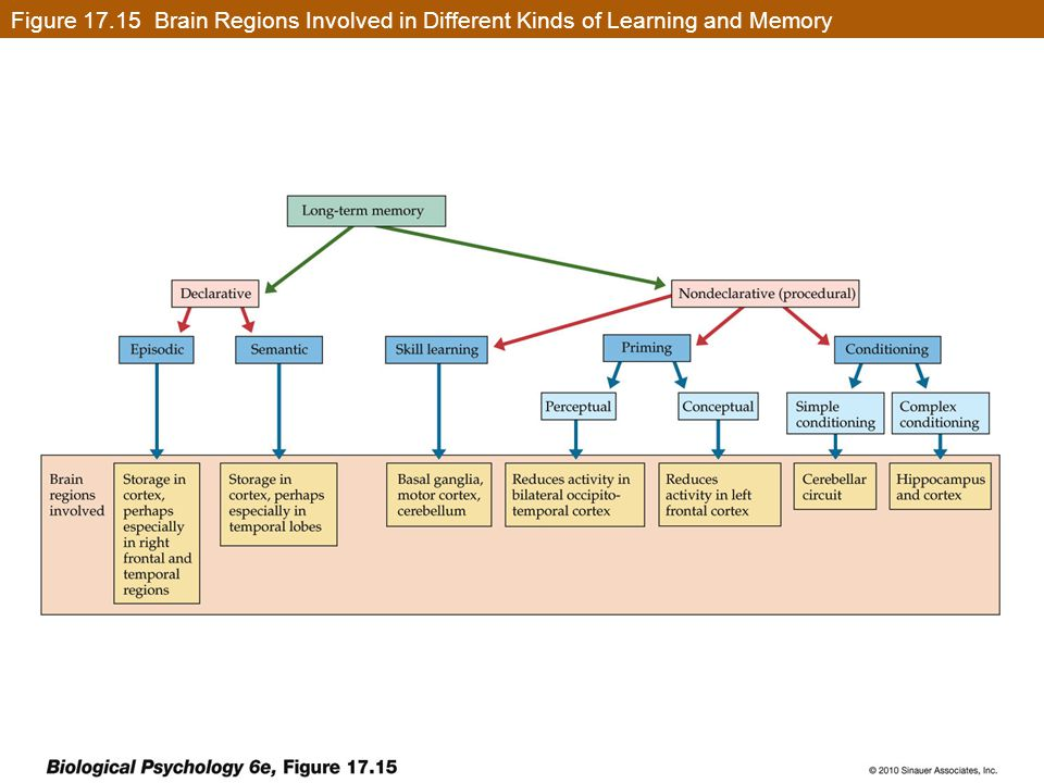 Figure 17.15 Brain Regions Involved in Different Kinds of Learning and Memory