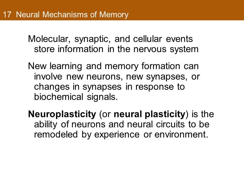 17 Neural Mechanisms of Memory