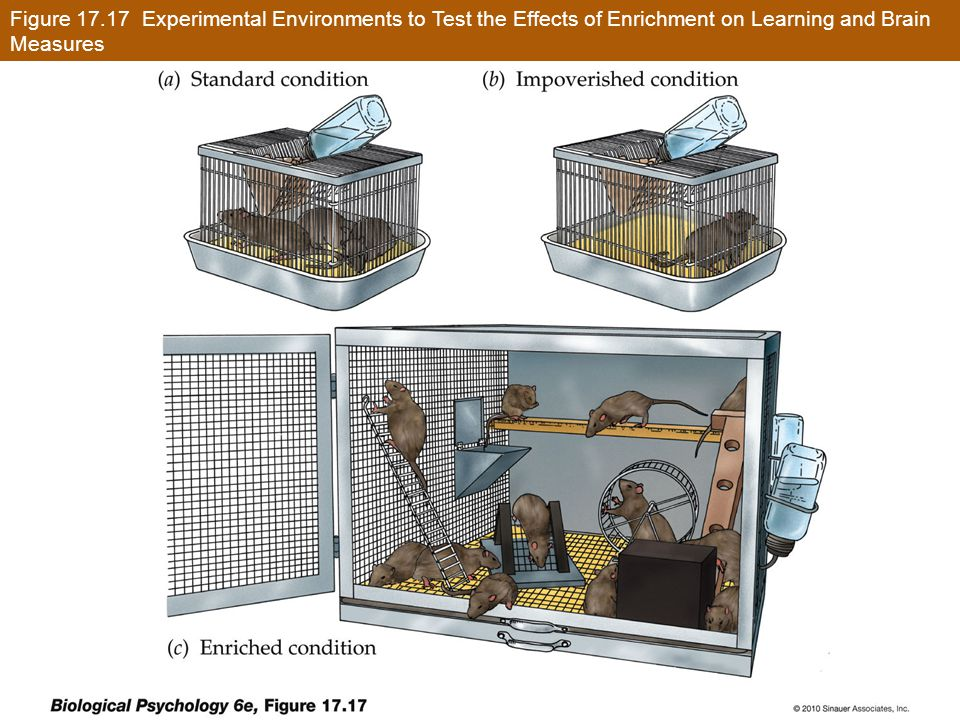 Figure 17.17 Experimental Environments to Test the Effects of Enrichment on Learning and Brain Measures