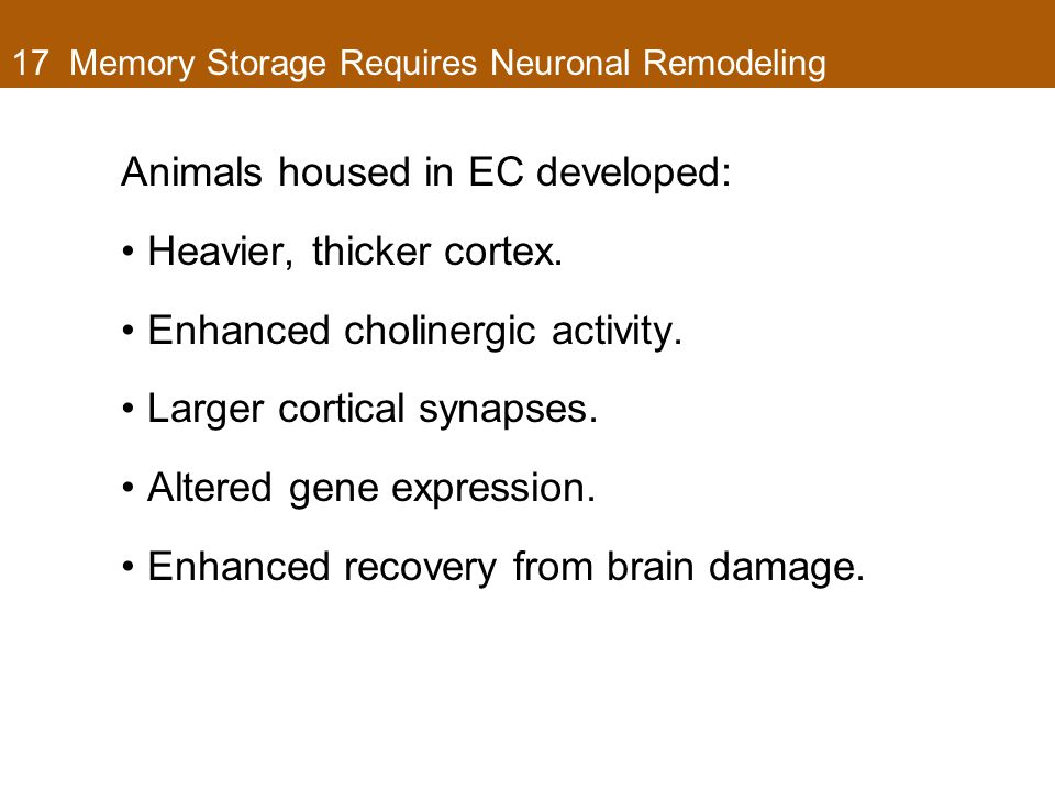 17 Memory Storage Requires Neuronal Remodeling