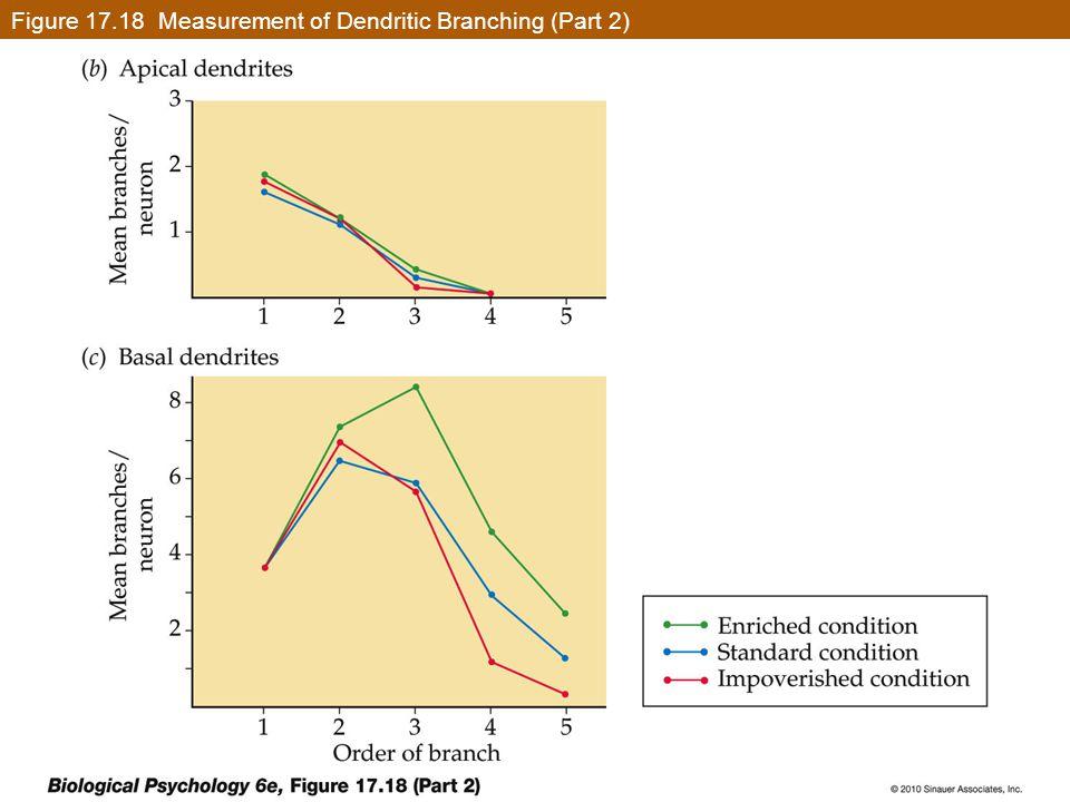 Figure 17.18 Measurement of Dendritic Branching (Part 2)