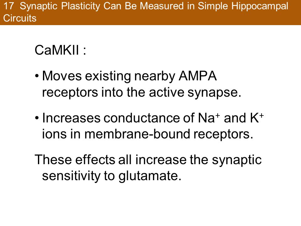 17 Synaptic Plasticity Can Be Measured in Simple Hippocampal Circuits