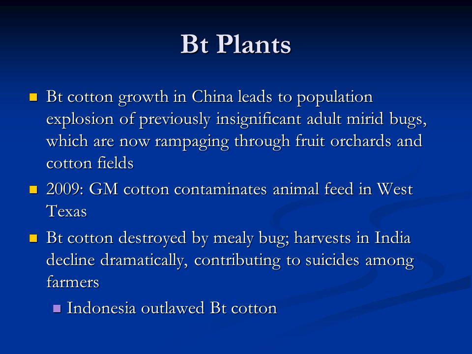 Bt Plants
