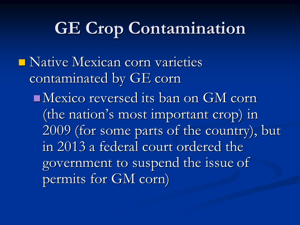 GE Crop Contamination Native Mexican corn varieties contaminated by GE corn.