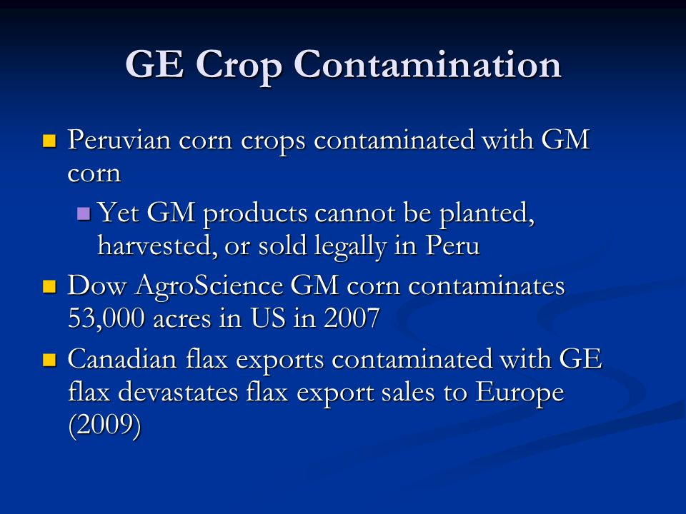 GE Crop Contamination Peruvian corn crops contaminated with GM corn