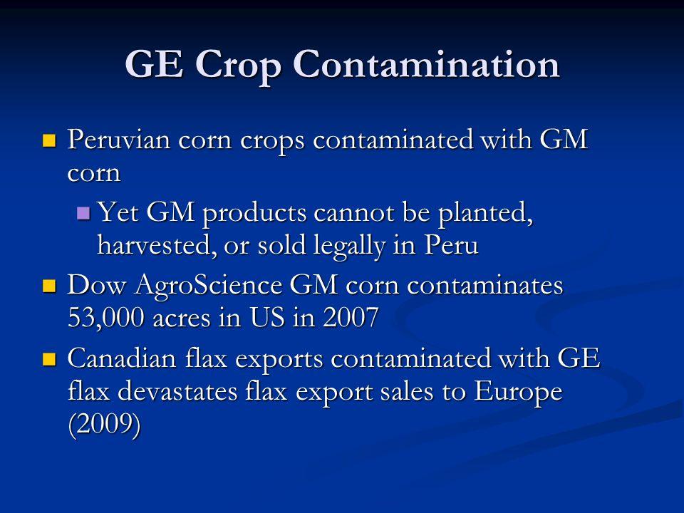 GE Crop Contamination Peruvian corn crops contaminated with GM corn