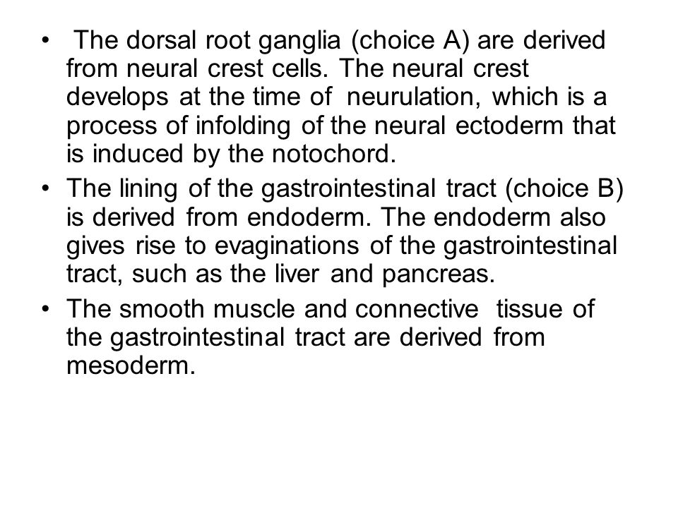 The dorsal root ganglia (choice A) are derived from neural crest cells