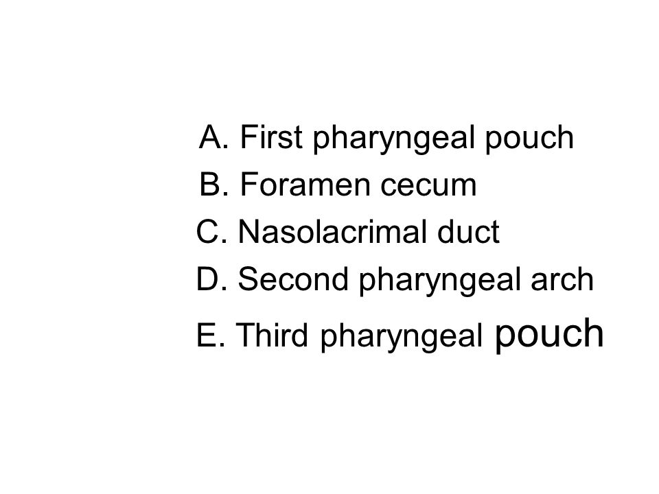 D. Second pharyngeal arch E. Third pharyngeal pouch