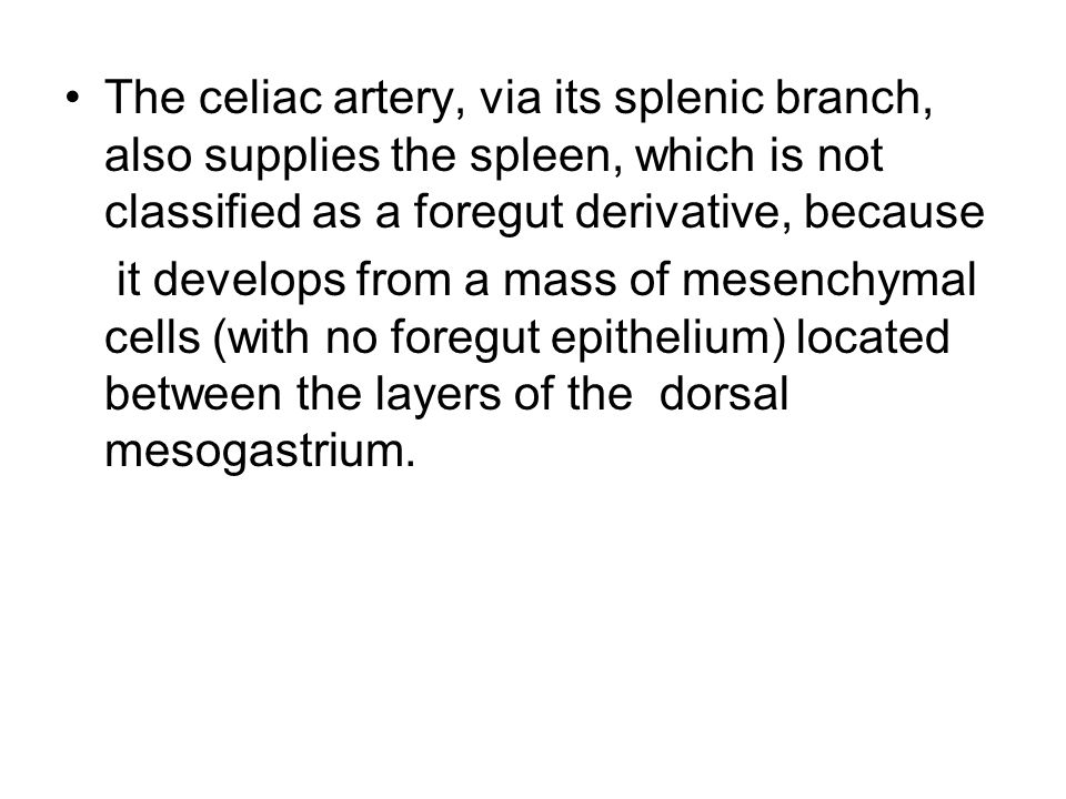 The celiac artery, via its splenic branch, also supplies the spleen, which is not classified as a foregut derivative, because