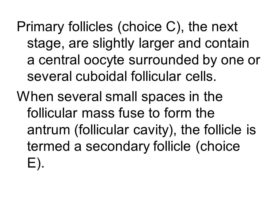 Primary follicles (choice C), the next stage, are slightly larger and contain a central oocyte surrounded by one or several cuboidal follicular cells.