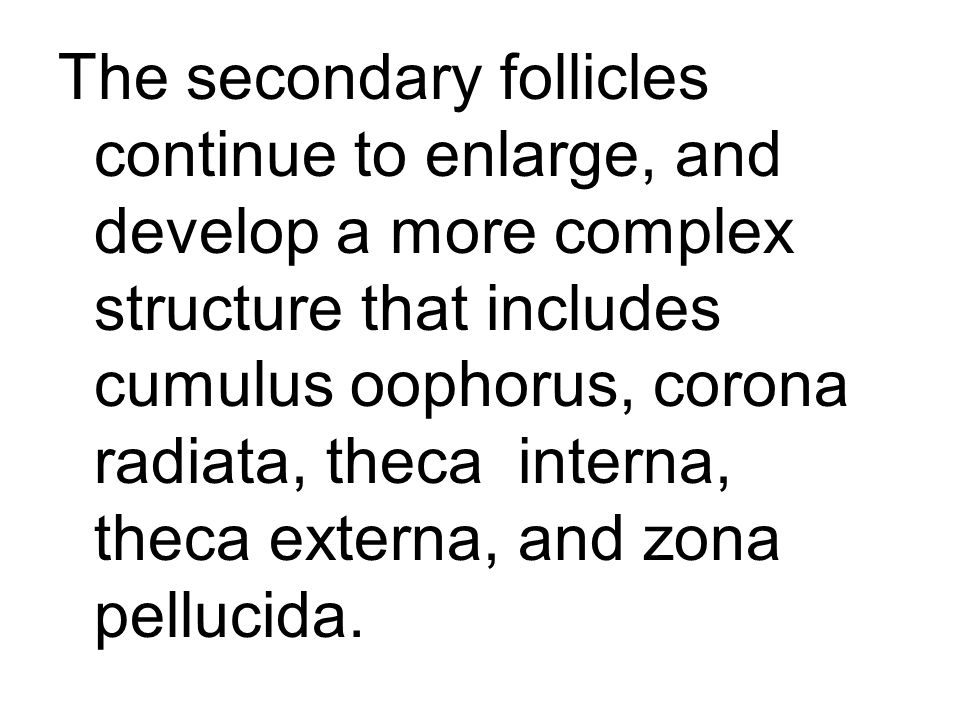 The secondary follicles continue to enlarge, and develop a more complex structure that includes cumulus oophorus, corona radiata, theca interna, theca externa, and zona pellucida.