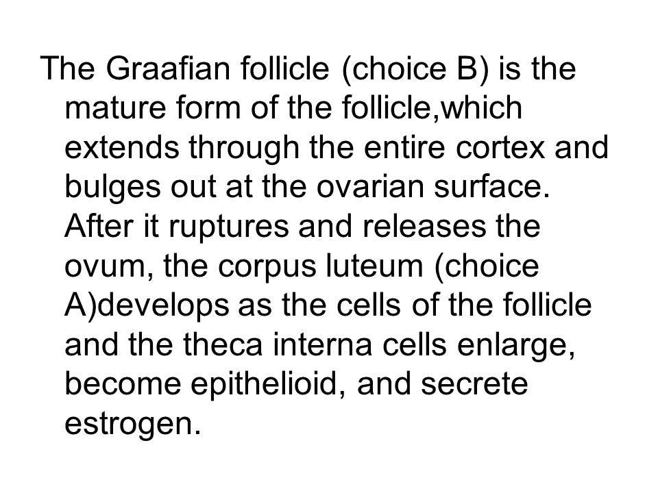 The Graafian follicle (choice B) is the mature form of the follicle,which extends through the entire cortex and bulges out at the ovarian surface.