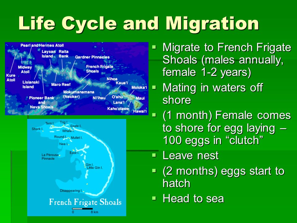 Life Cycle and Migration