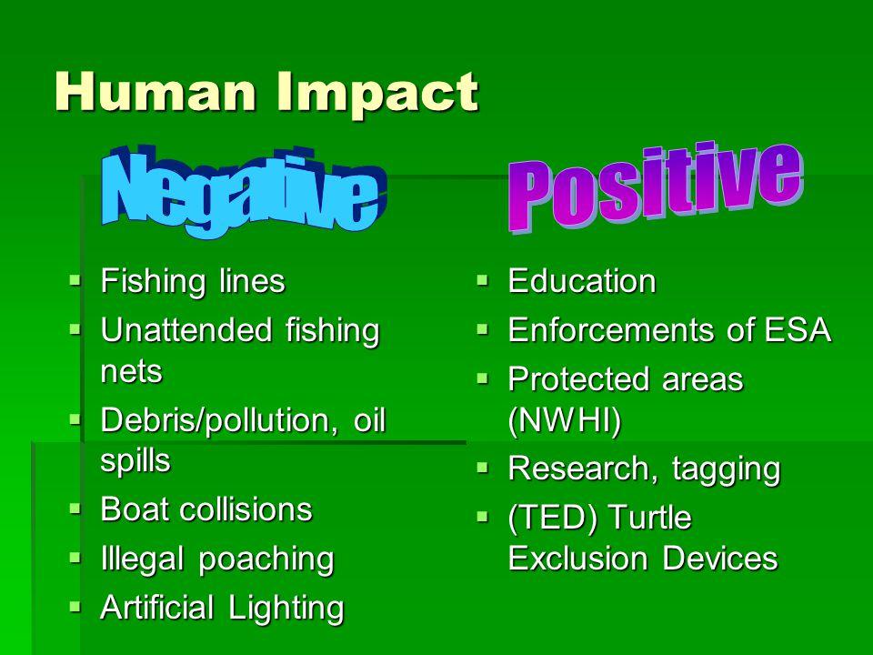 Human Impact Positive Negative Fishing lines Unattended fishing nets