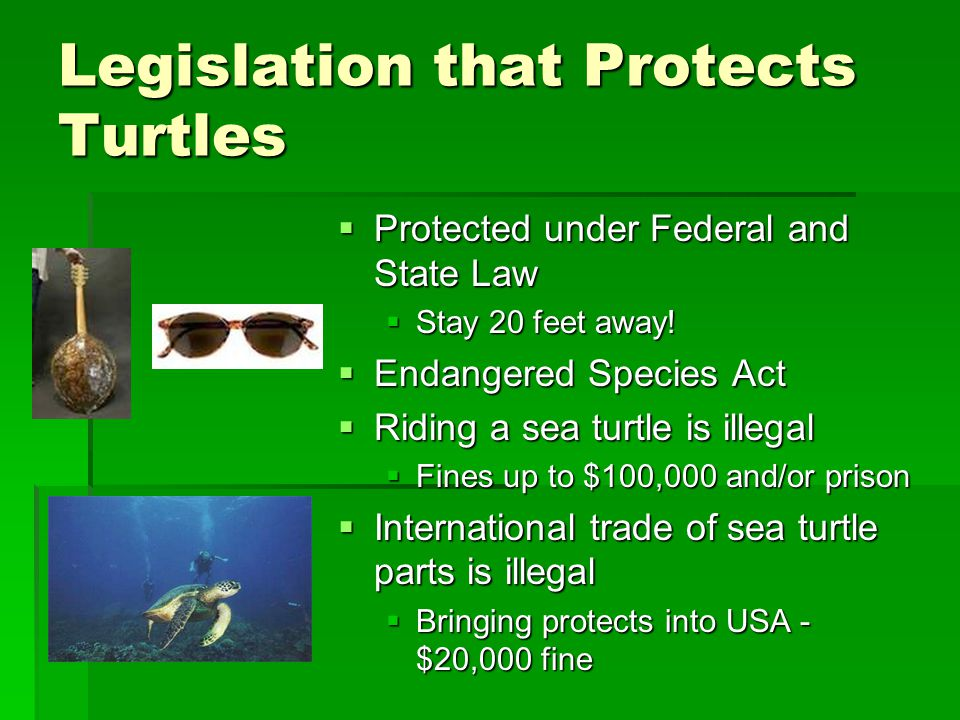 Legislation that Protects Turtles