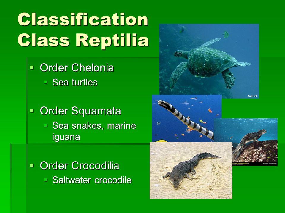 Classification Class Reptilia