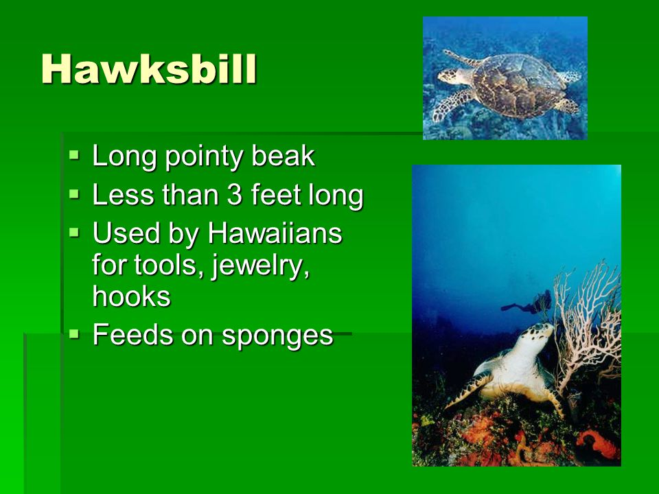 Hawksbill Long pointy beak Less than 3 feet long