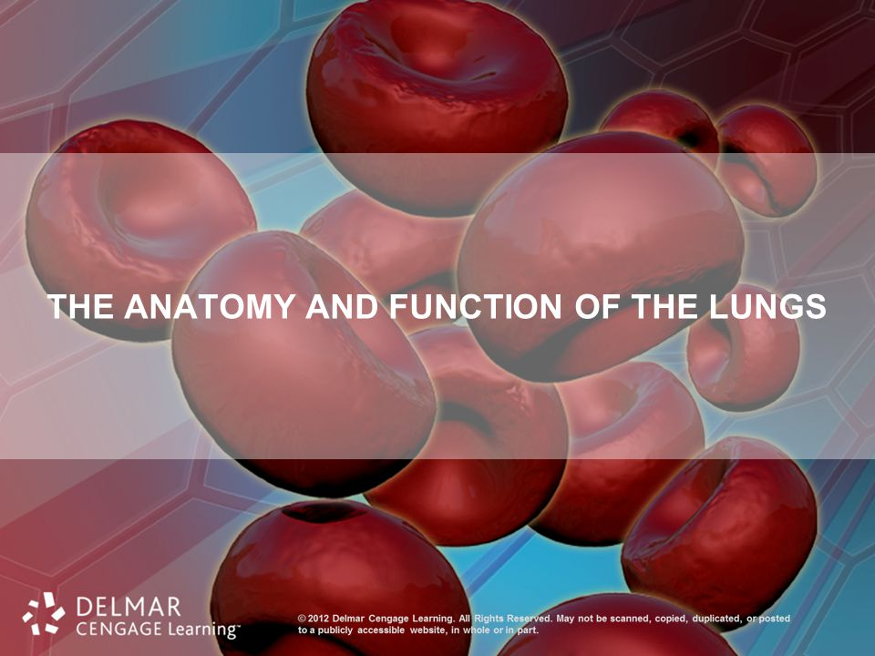 The Anatomy and Function of the Lungs