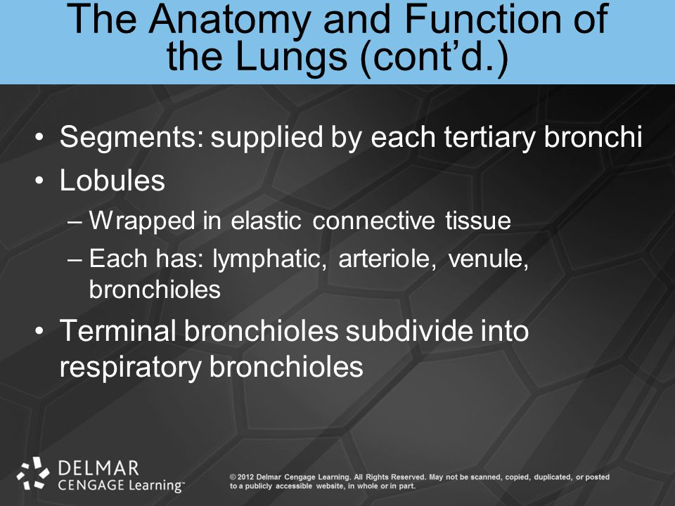 The Anatomy and Function of the Lungs (cont'd.)