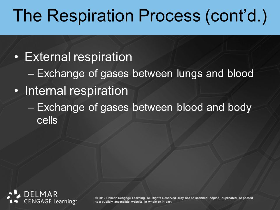 The Respiration Process (cont'd.)