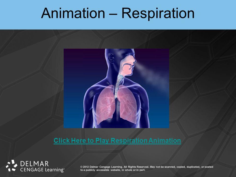 Animation – Respiration