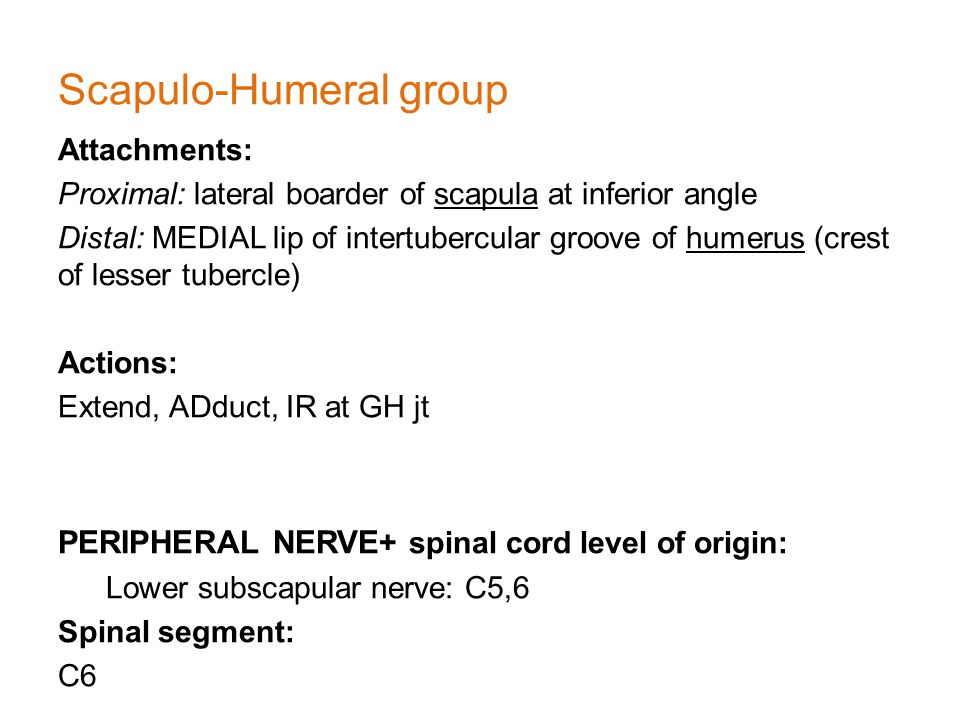 Scapulo-Humeral group