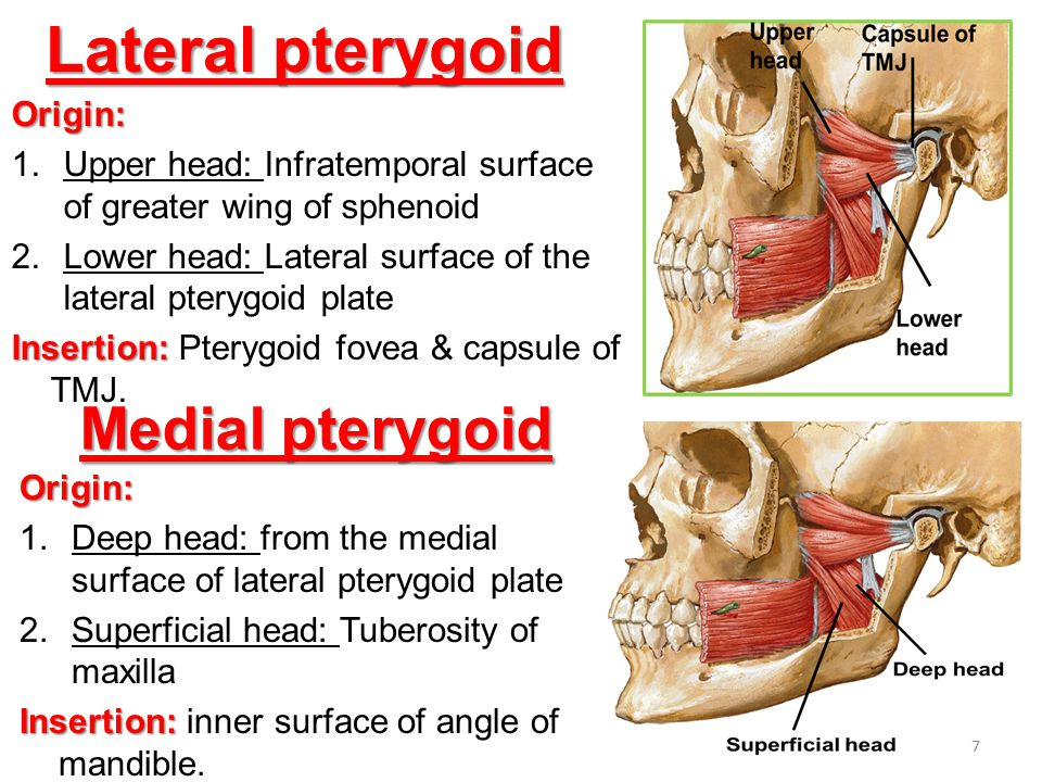 Lateral pterygoid Medial pterygoid Origin: