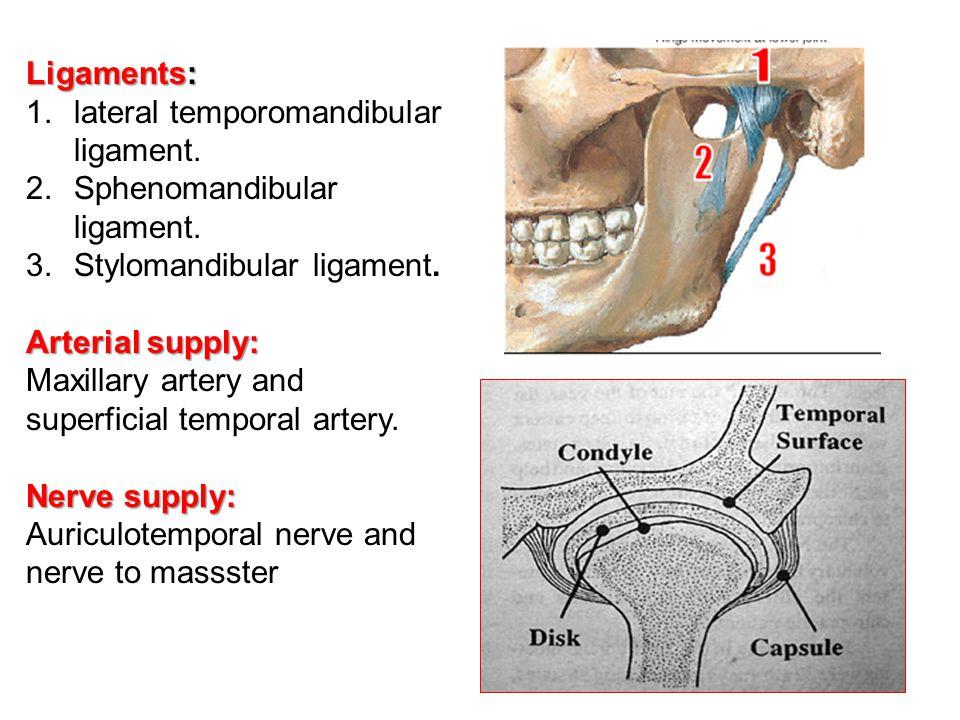 Ligaments: lateral temporomandibular ligament. Sphenomandibular ligament. Stylomandibular ligament.