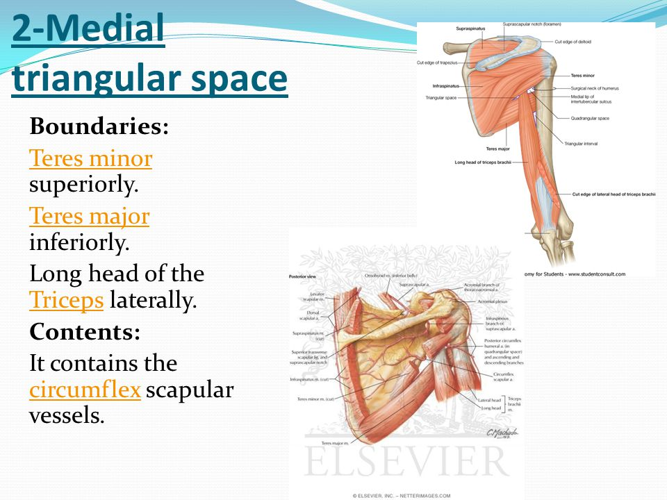 2-Medial triangular space