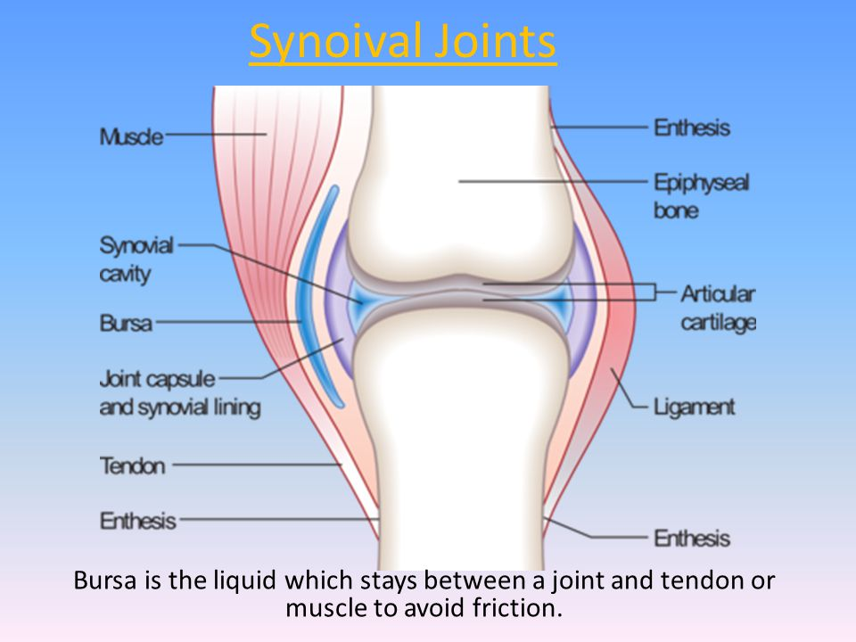Synoival Joints Bursa is the liquid which stays between a joint and tendon or muscle to avoid friction.