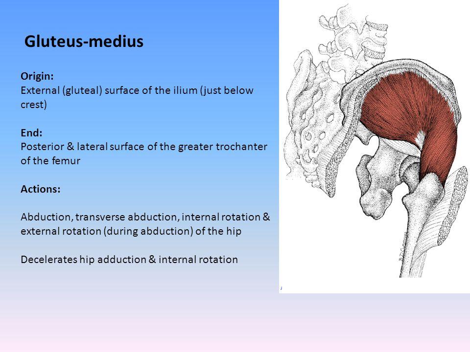 Gluteus-medius Origin: