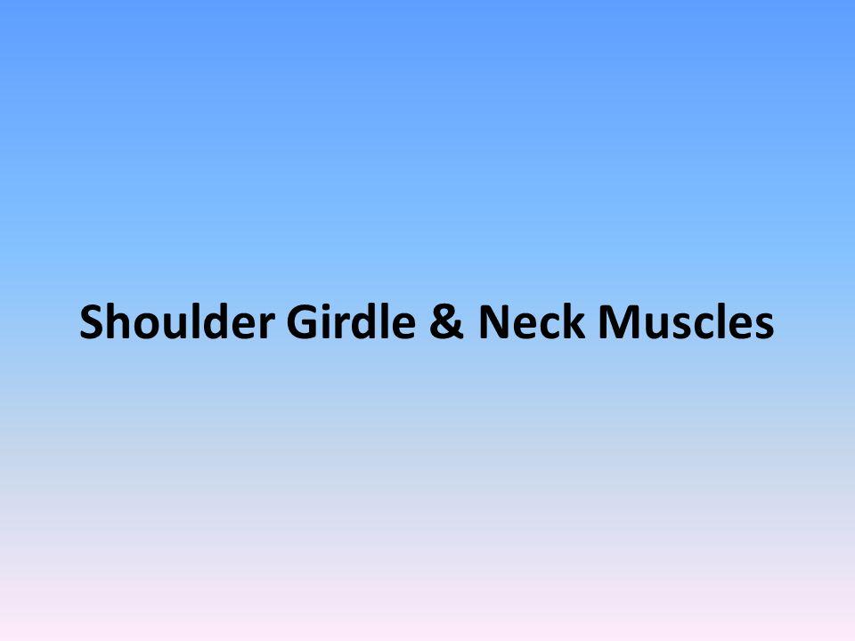 Shoulder Girdle & Neck Muscles