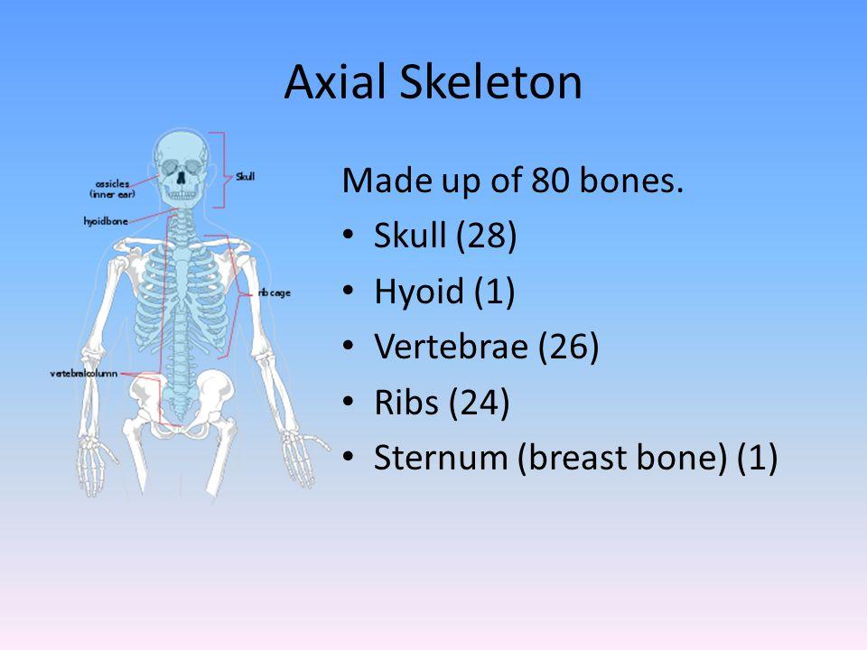 Axial Skeleton Made up of 80 bones. Skull (28) Hyoid (1)
