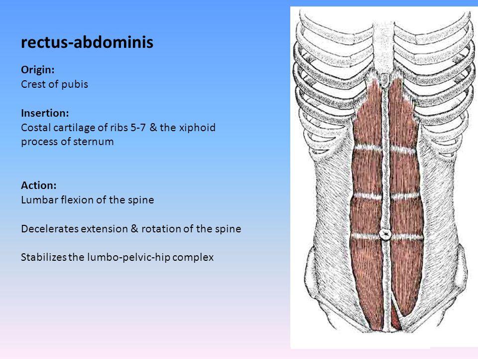 rectus-abdominis Origin: Crest of pubis Insertion: