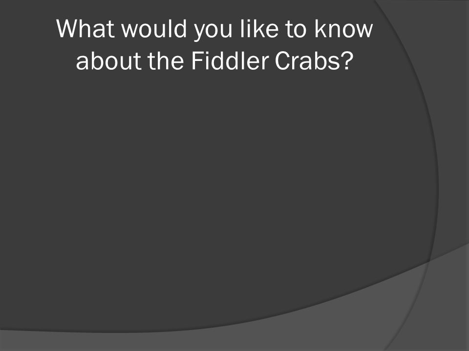 What would you like to know about the Fiddler Crabs