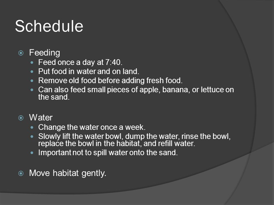 Schedule Feeding Water Move habitat gently. Feed once a day at 7:40.