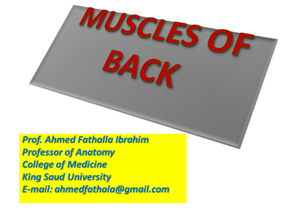 MUSCLES OF BACK Prof. Ahmed Fathalla Ibrahim Professor of Anatomy