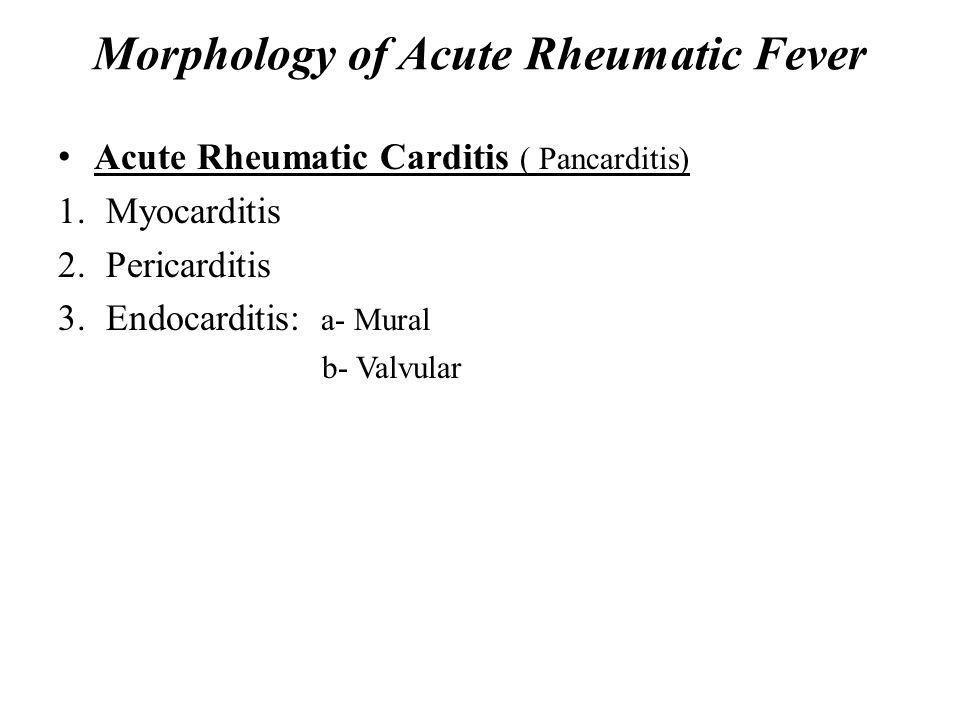 Morphology of Acute Rheumatic Fever