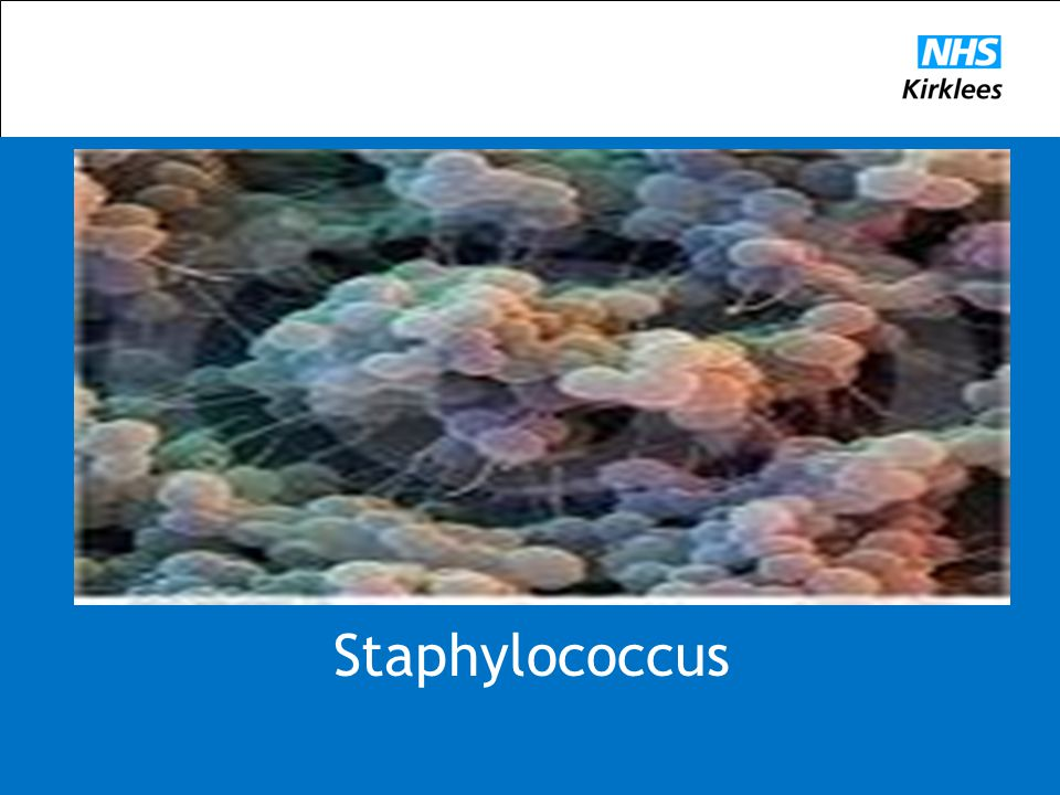 Staphylococcus aureus is a bacterium that is a common colonizer of human skin and mucosa. Staphylococcus aureus can cause disease, particularly if there is an opportunity for the bacteria to enter the body.